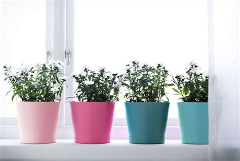 Ikea Wall Planter by Plants Plant Pots Amp Stands Decoration Ikea