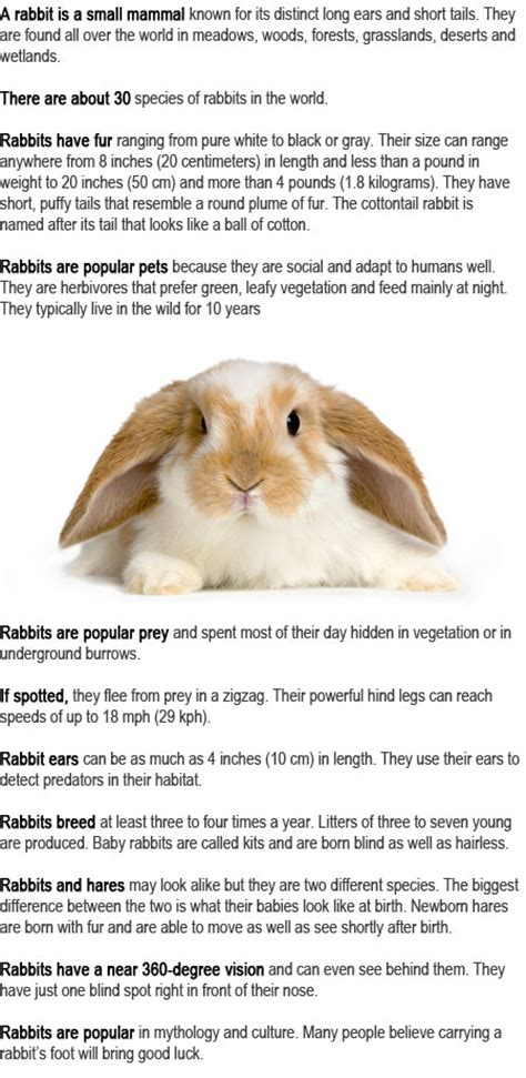 7 Facts On Bunny Rabbits by Rabbit Facts For Childhood Education