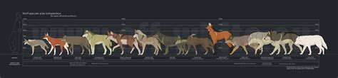 wolf size compared to wolves souls comprehensive guide