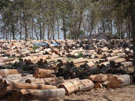 Undang Undang Kehutanan Dan Illegal Logging teak investation
