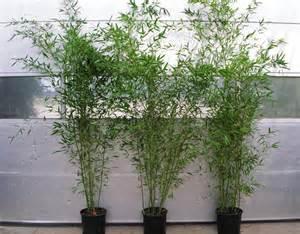 kosten für gartengestaltung chestha terrasse bepflanzen dekor