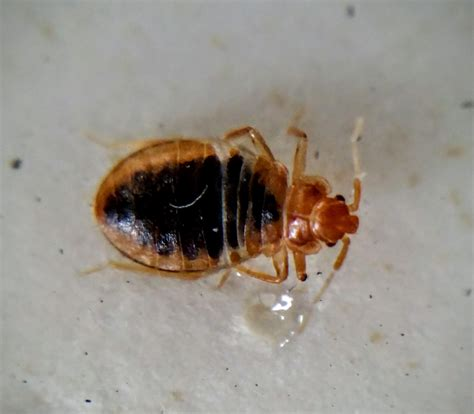 bed bug news does your hometown rank amongst the worst with bed bugs