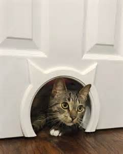 10 truly amazing cat doors and entryways petslady