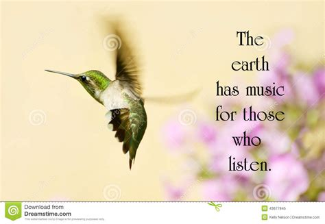 quotes about pictures inspirational quote stock photo image 43677845