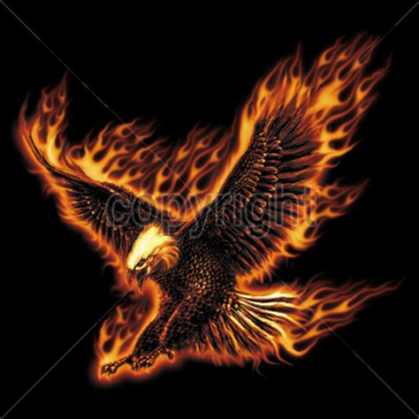 T Shirt Cotton Gildan Aguilas t shirt custom design burning eagle bird of prey