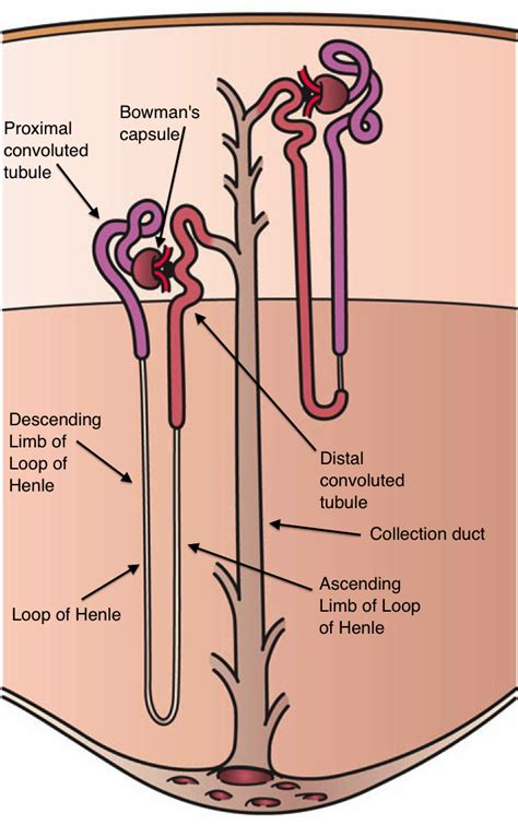 Wisconsin Court System Simple Search Nephron
