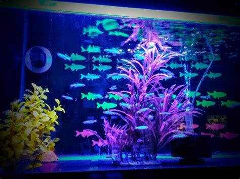 Neon Aquarium Decorations by Neon Aquarium Decorations 1000 Aquarium Ideas