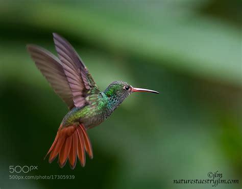 colorful hummingbirds colorful hummingbirds flying