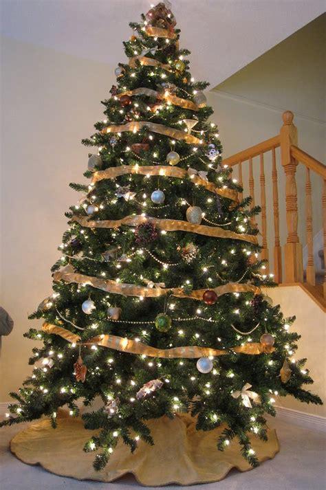 a family tree of holidays christmas trees christmas