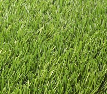 prezzi tappeti erbosi tappeto erboso rotoli prato