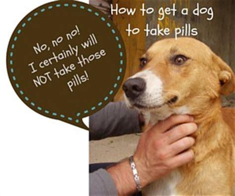 how to get a to take a pill how to get a to take pills doggiedemeanor