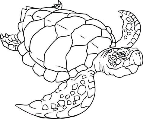 coloring pages loggerhead turtle loggerhead turtle coloring page old sea evolution colori