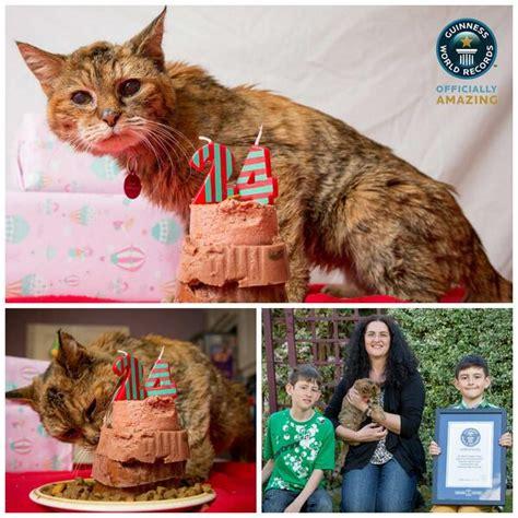 oldest living guinnessworldrecords on quot world s oldest living cat meet 24 year poppy