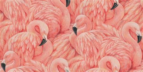 flamingos mac wallpaper flamingos wallpaper