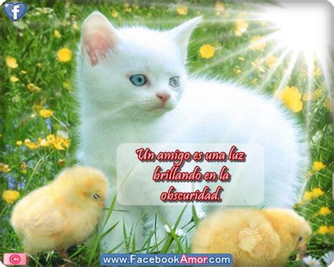 Imagenes Bonitas De Amistad Para Compartir | imagenes b0nitas de amistad imagui