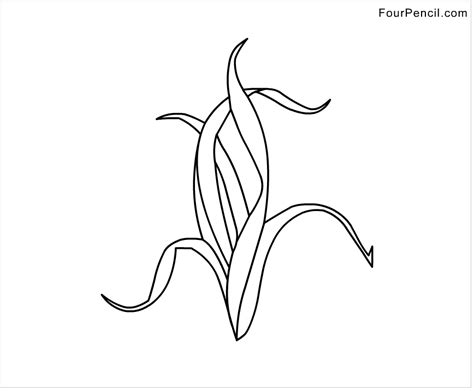 kelp coloring pages coloring pages