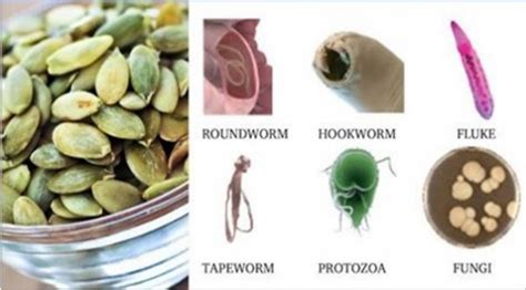 how to eat pumpkin seeds to kill intestinal parasites