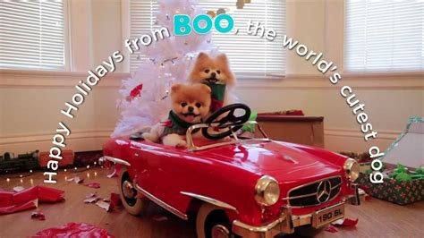 boo the dog christmas a adventure with boo the world s cutest