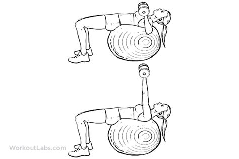 Assisted Bench Press Machine Stability Swiss Exercise Ball Dumbbell Chest Press