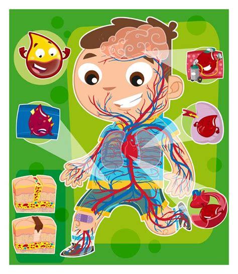 imagenes que lloran sangre explicacion las 25 mejores ideas sobre sistema circulatorio en