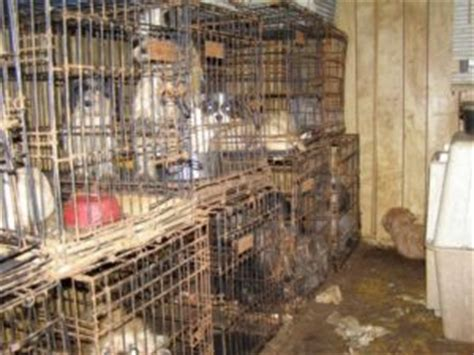 Backyard Sheds Plans puppy mills commercial and backyard dog breeders