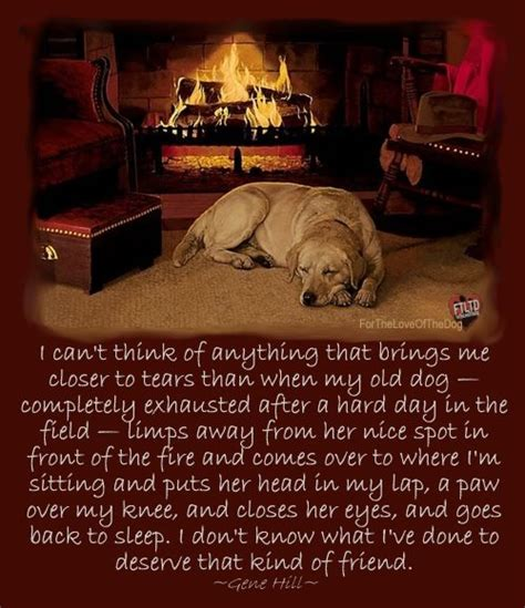 images of love dogs dogs love quotes for facebook quotesgram
