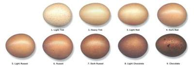 egg color chart chicken egg color chart quotes