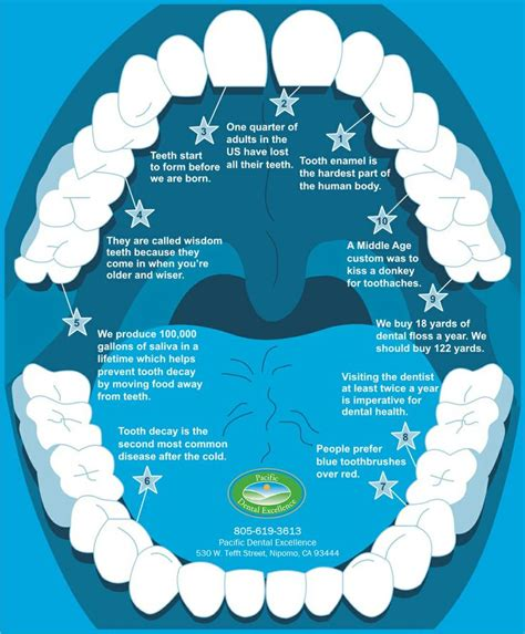 facts about your teeth