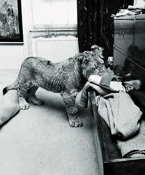 film about lion from harrods have you ever wanted a live monkey sent by mail in the 60
