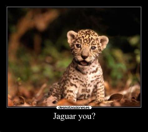 Imagenes Jaguar You   im 225 genes y carteles de jaguar pag 2 desmotivaciones