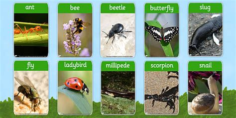 backyard bugs 101 flashcards for discovering insects books minibeasts photo flash cards minibeast visual aid