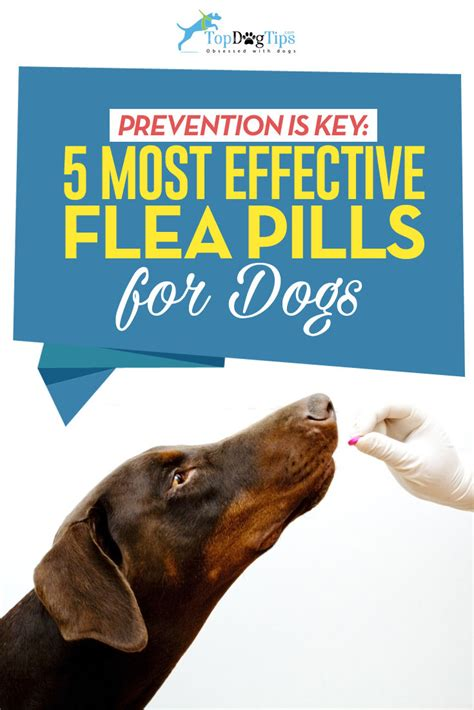 tick and flea pills for dogs top 6 best flea pills for dogs in 2018 based on safety and efficacy