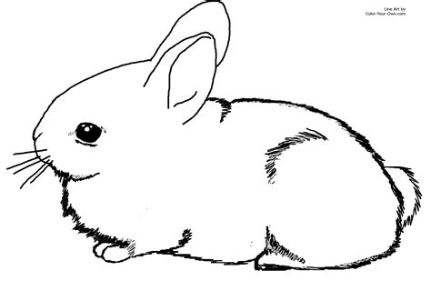 bunny coloring page adorable baby cottontail rabbit bunny coloring page