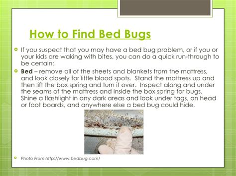 find a bed the truth about bed bugs