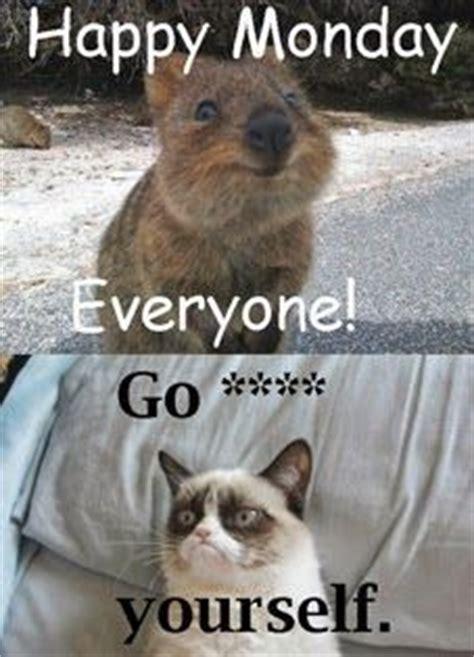 Grumpy Cat Monday Meme - happy grumpy monday grumpy cat meme grumpycat grumpy
