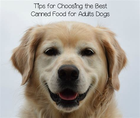 best soft puppy food soft food for dogs the best of 2017