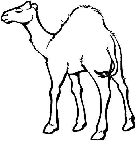 free camel coloring pages