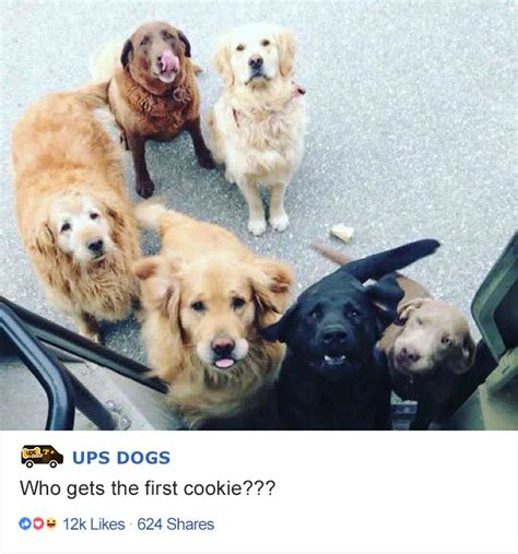 ups dogs turns out ups drivers a about dogs they meet on their routes and