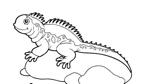 Imagenes Para Colorear Iguana   dibujos de iguanas para colorear y pintar