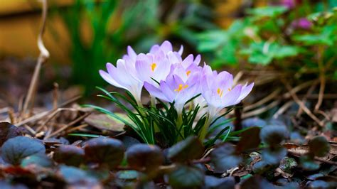 spring flowers spring wallpapers 2014 enjoy think spring auntie
