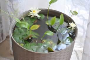 fiori di ninfea ninfea acqua e terra