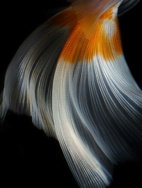 designboom photography tamsin allen creative photography still life fish