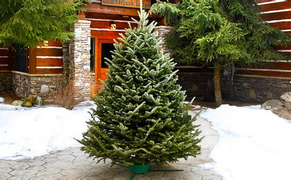 65 off fresh cut real fraser fir christmas tree 49 orig