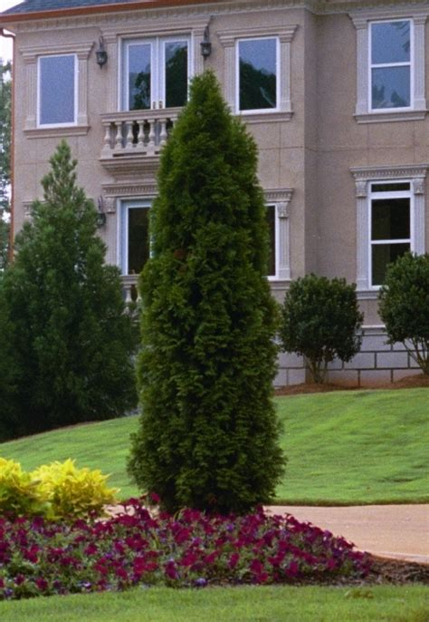 Landscaping Ideas Emerald Green Arborvitae Landscaping My Nashville Home Possibilities