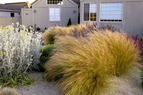 Dry garden photos design ideas remodel and decor lonny