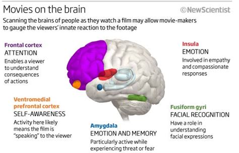 different sections of the brain brain activity while watching movies personality
