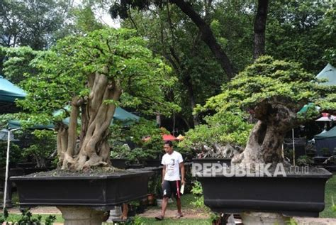 Khazanah Flora Dan Fauna Nusantara berburu tanaman di pameran flora dan fauna 2017
