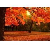 Automne Season Nature Landscapes Rain Fall Wallpapers Leaf