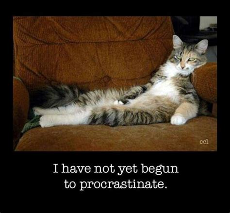 picture quotes procrastination quotes sayings