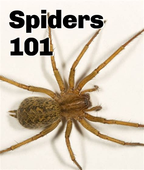 sw spider house 1000 images about spiders on pinterest rose hair tarantula female black widow and